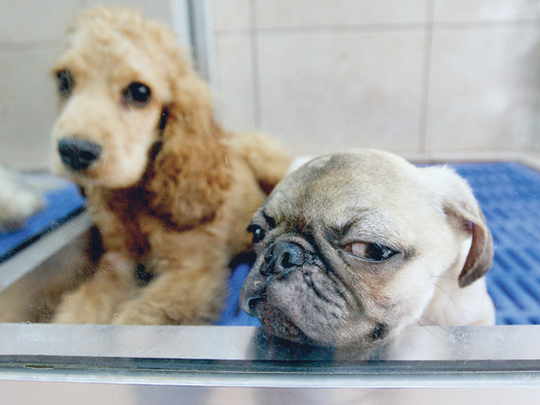 Parvovirus gives dog owners a wake-up call