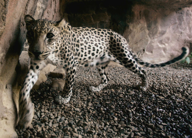 How you can help save the UAE's endangered species
