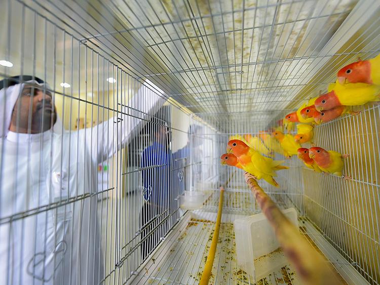 Long-awaited Dubai pet market now open | Uae – Gulf News