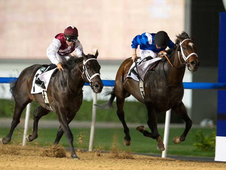 can you bet on horse racing in dubai