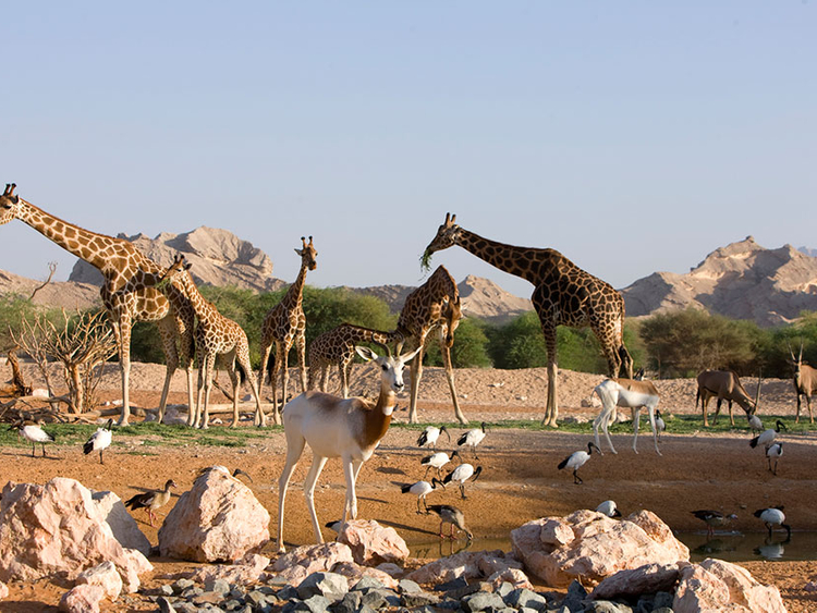 Top family animal experiences in the UAE | Family – Gulf News