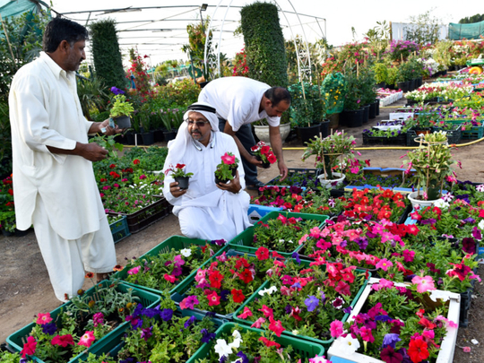 Dubai Plant Souq Offers Oasis Of Shopping Uae Gulf News