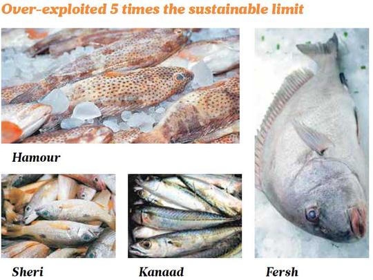 UAE fish stocks are severely overexploited