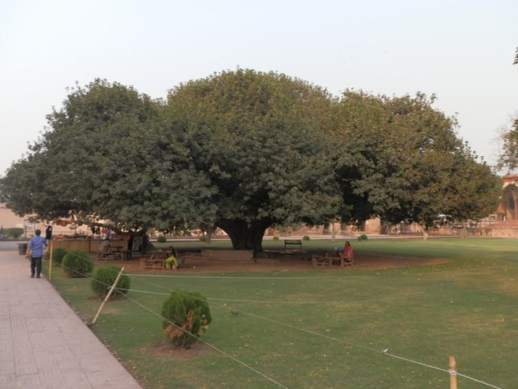 Under the banyan trees of Lahore | Pakistan – Gulf News