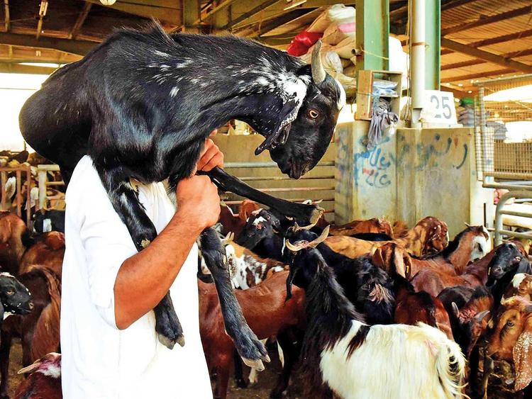 Livestock prices jump ahead of Eid Al Adha