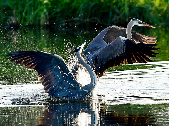 Birds playing in the water