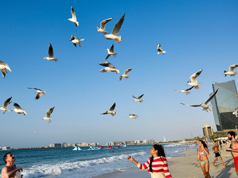 People feed migratory seagulls