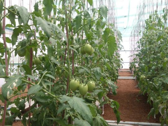 wkr_hydroponics 2