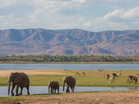 tab  Zimbabwe Travel  iStock-600395358
