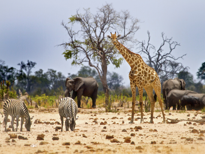 tab  Zimbabwe Travel  iStock-606666442