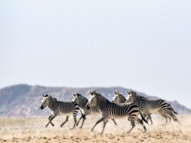 tab  Zimbabwe Travel  iStock-670349898