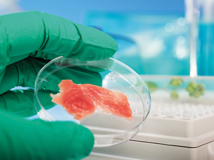 An expert inspects meat grown in a lab