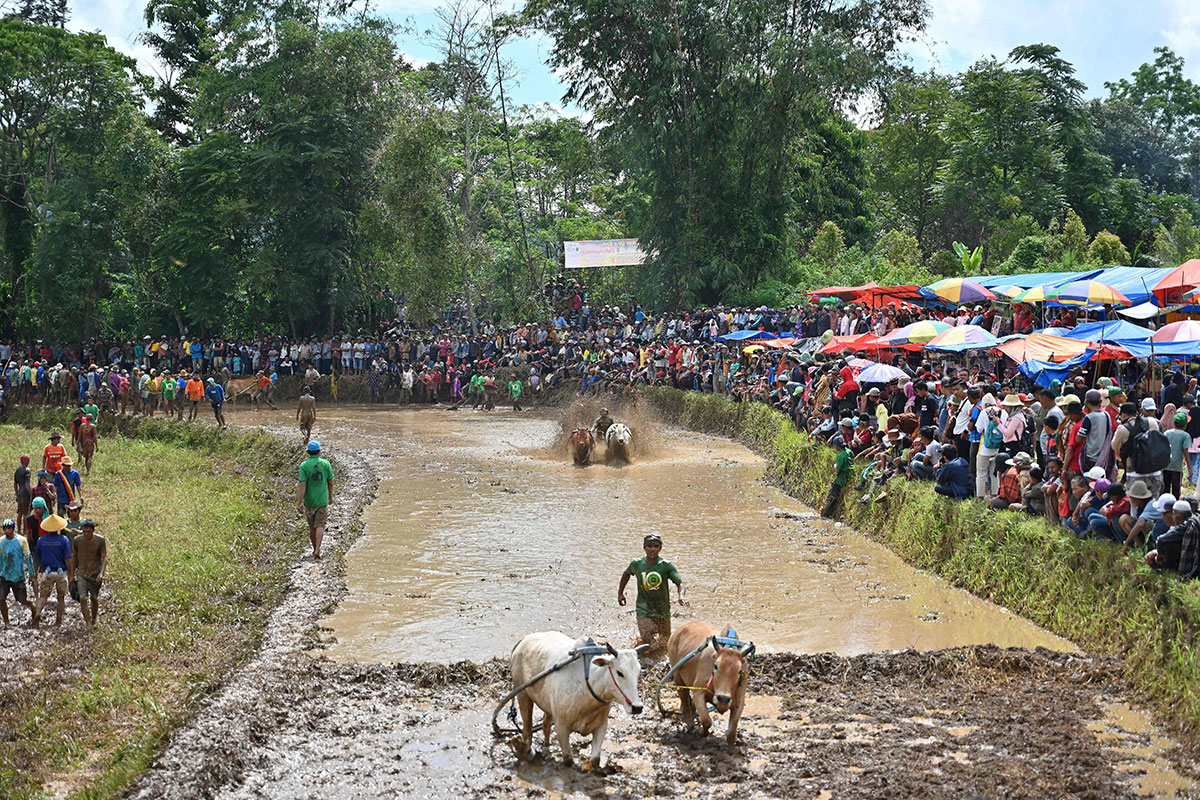 People watching as jockeys riding bulls