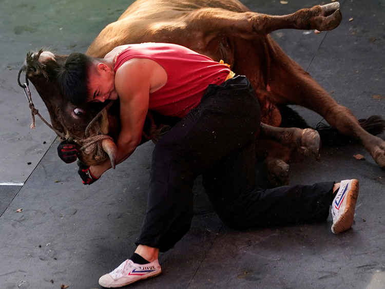CHINA-BULLFIGHTING-(Read-Only)