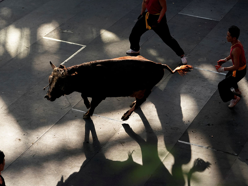 CHINA-BULLFIGHTING-2-(Read-Only)