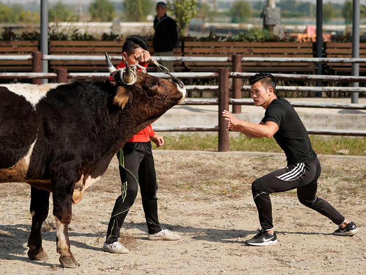 CHINA-BULLFIGHTING-8 (Read-Only)