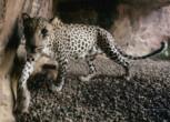 RDS_181208 Weekly Trends - Wildlife