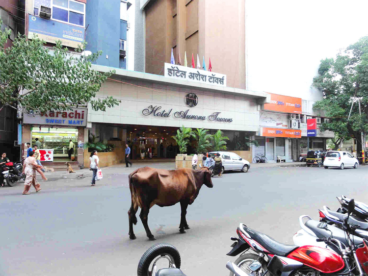 181012 india cow