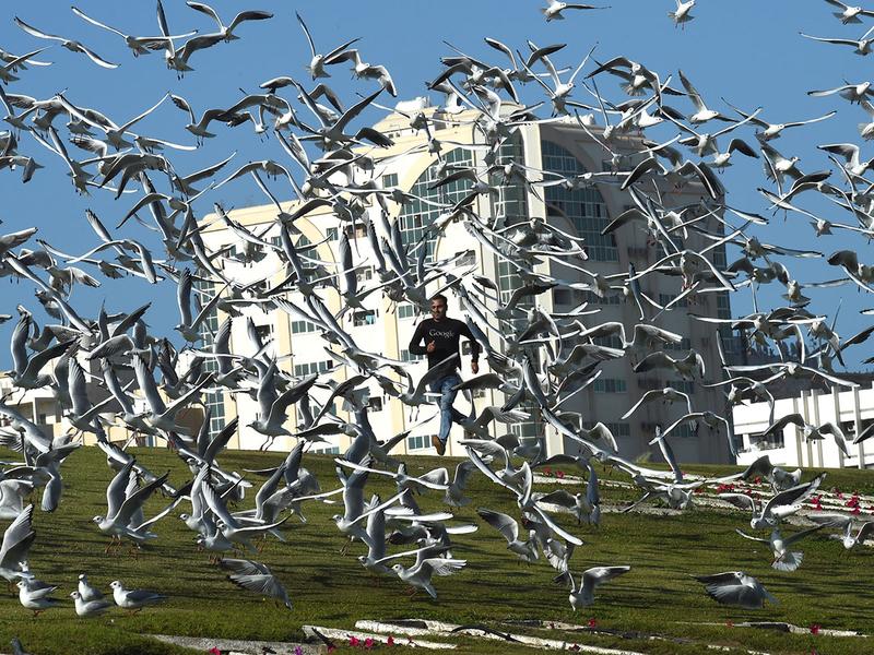 181210 migratory birds