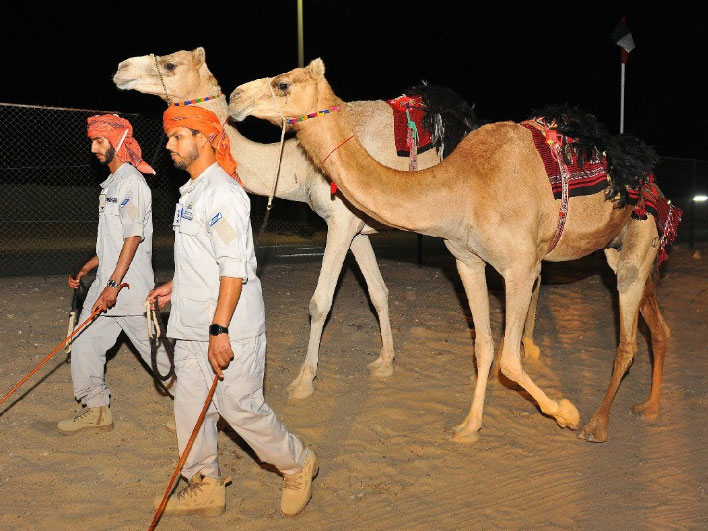Abu Dhabi Police camel patrol