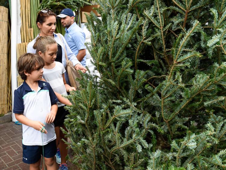 NAT_181216_CHRISTMAS TREE_VS-5