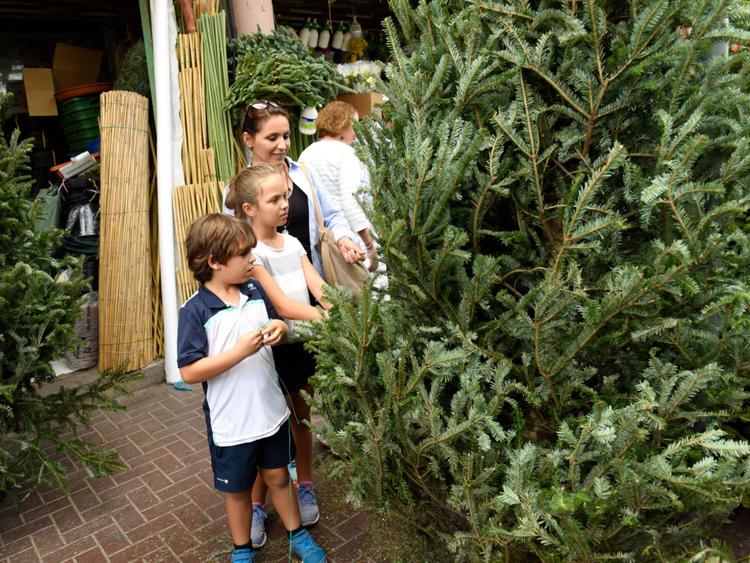 NAT_181216_CHRISTMAS TREE_VS-9