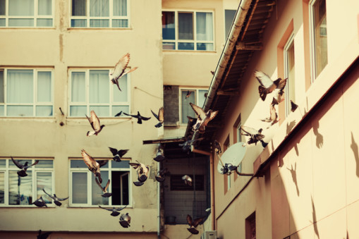 RDS 181215 Pigeons outside windows1