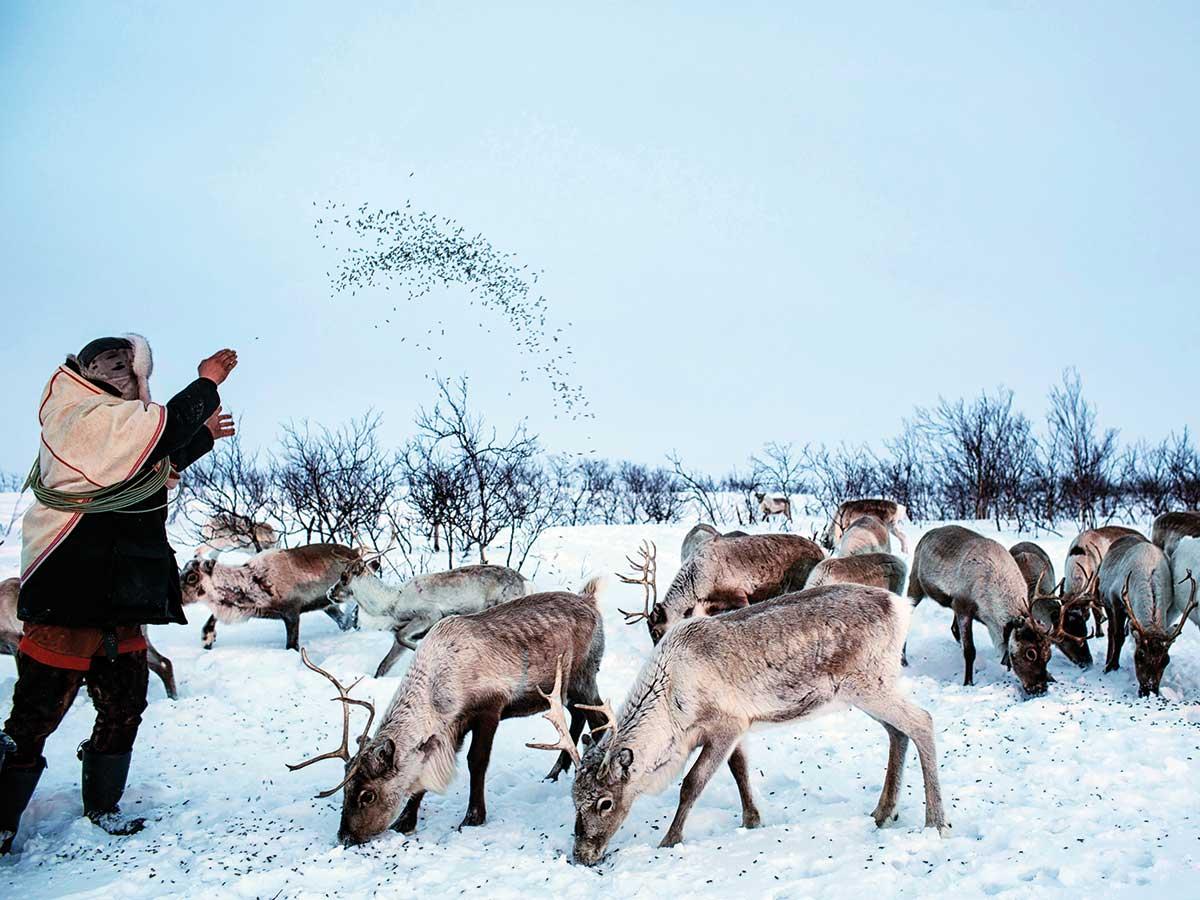 181222 reindeer life