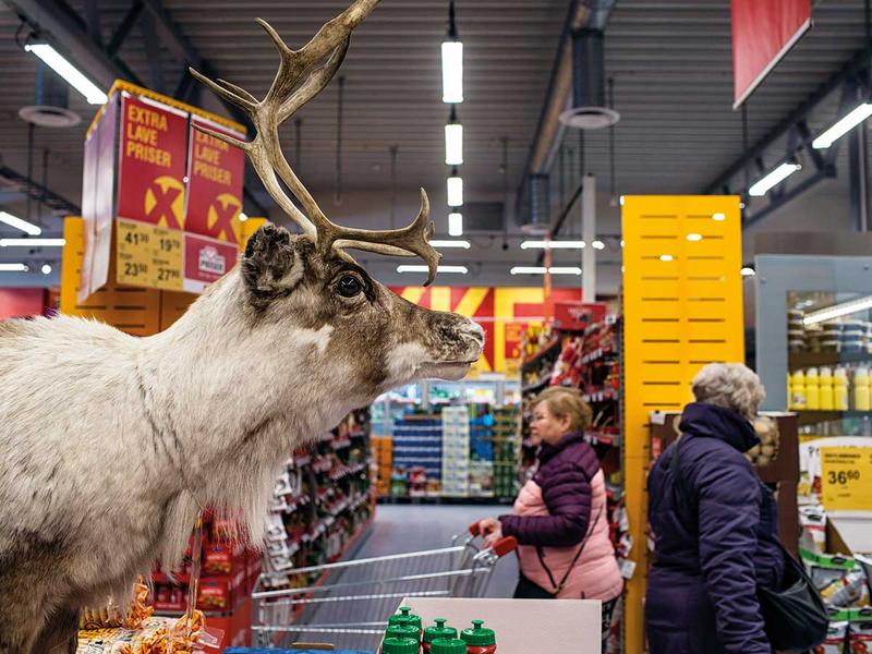 181222 stuffed reindeer
