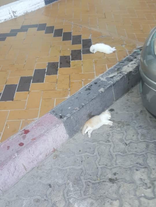 181223 dead cat on pavement