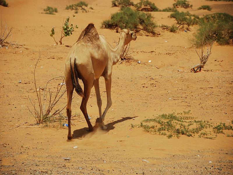 RAK Desert