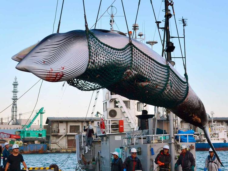 Japan Whaling file photo 26122018