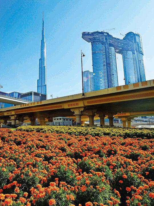 Cities in full bloom