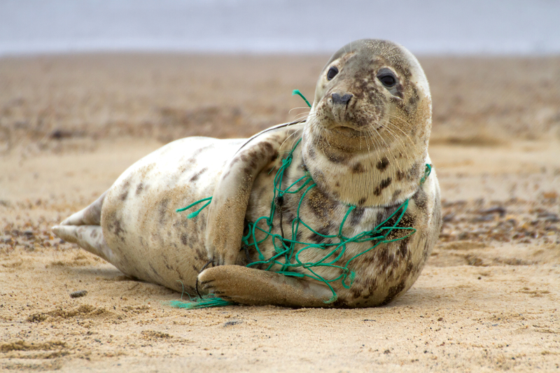 Grey Seal Plastic 1