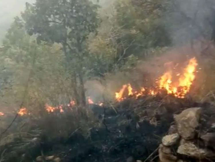 Nine dead in Tamil Nadu forest fire