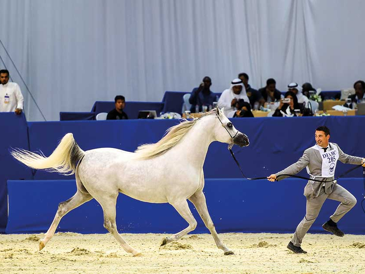 Local stud farm steals the show at $4m Dubai Arabian Horse