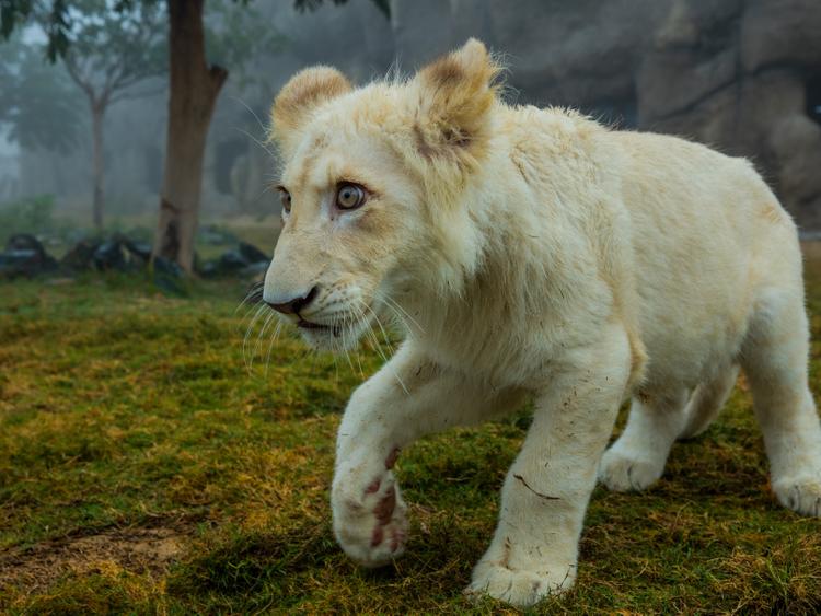 175 new-borns arrive in Dubai Safari   Going-out – Gulf News