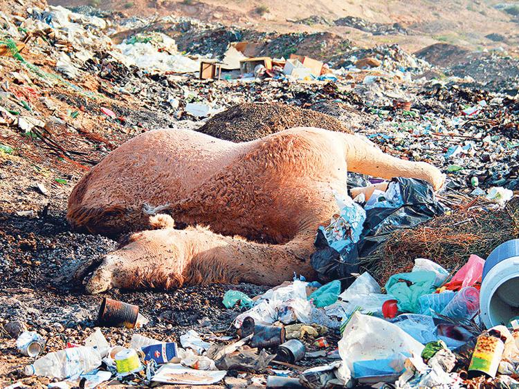 Pledge against plastic: It's time we fight back