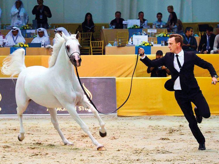 Countdown begins for Arabian horse show