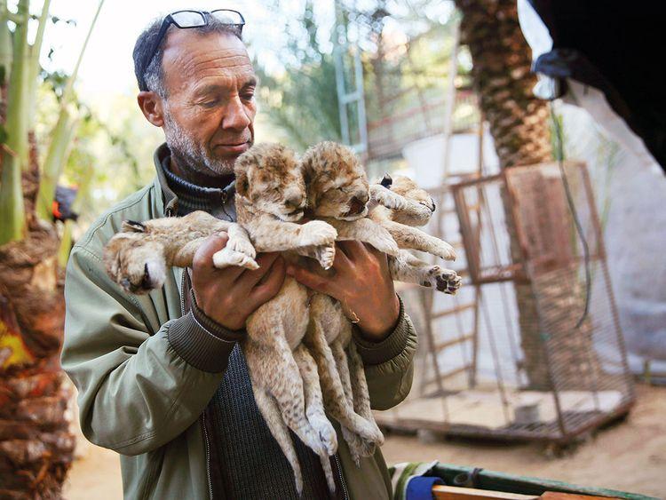 190121 lion cubs