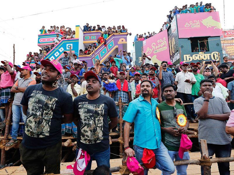 Spectators watch bulls perform during the Jallikattu