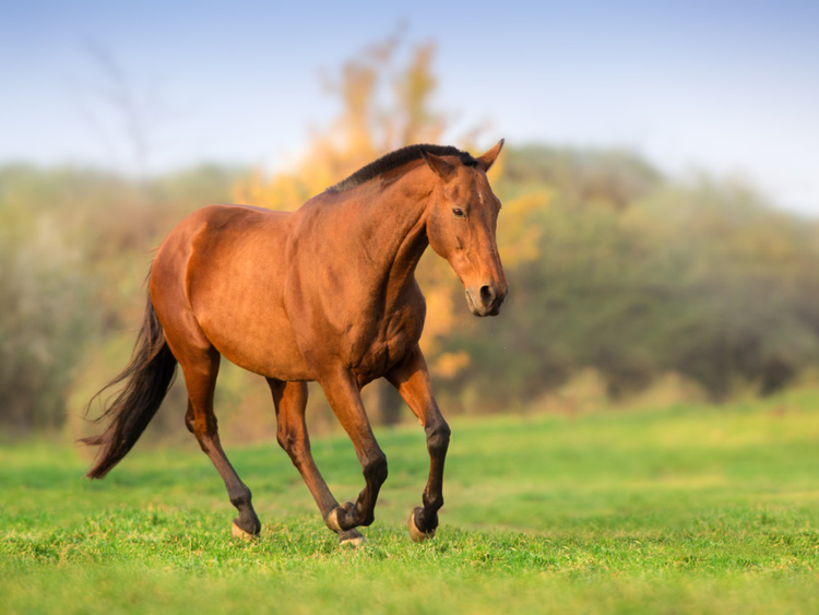 RDS_190122-Horse-Chase-2-1548164396020