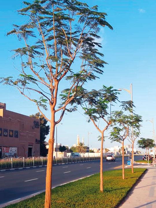 Jumeirah Beach Road.