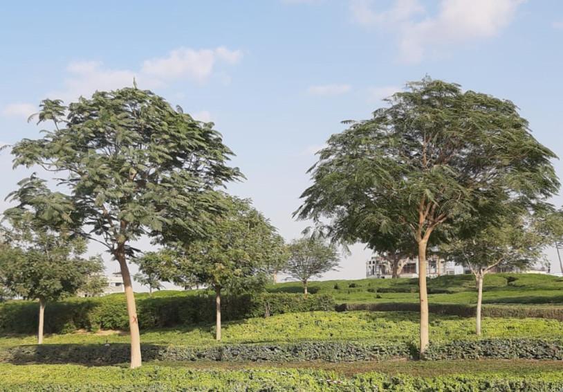 NAT-190124-Mature-Trees2-1548411036055