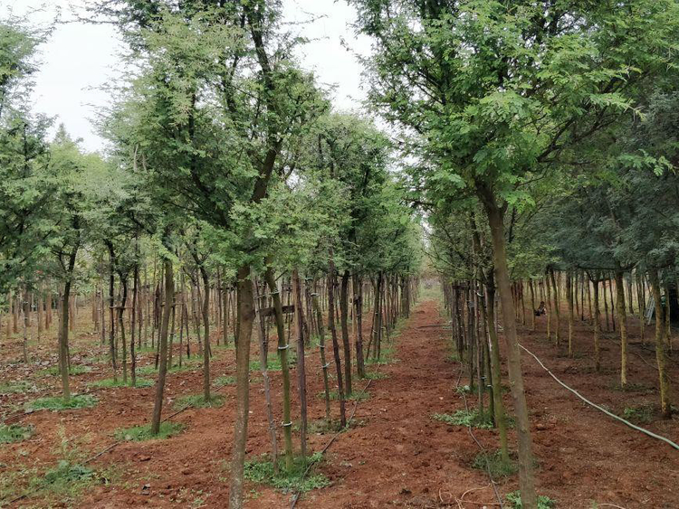 NAT_190113-Cottonwood-India_SK-1548411056135