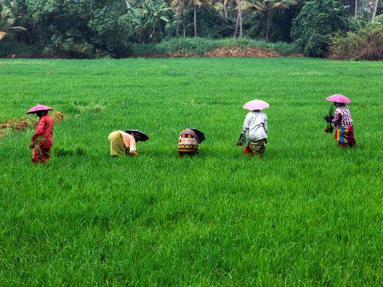 190126 farmers in kerala