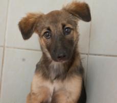 RDS_190204-CR---Save-an-animal---Bonnie-1-1549202206802