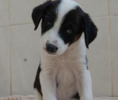 RDS_190204-CR---Save-an-animal---Ebony-1-1549202208965