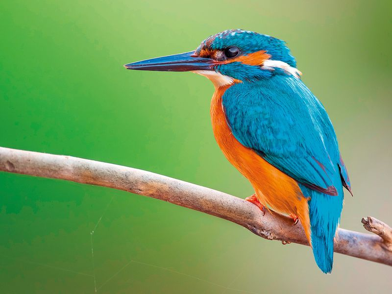 WKR-190209-Kingfishers-(Read-Only)