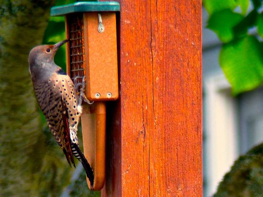 opn--Bird-feeder-(Read-Only)
